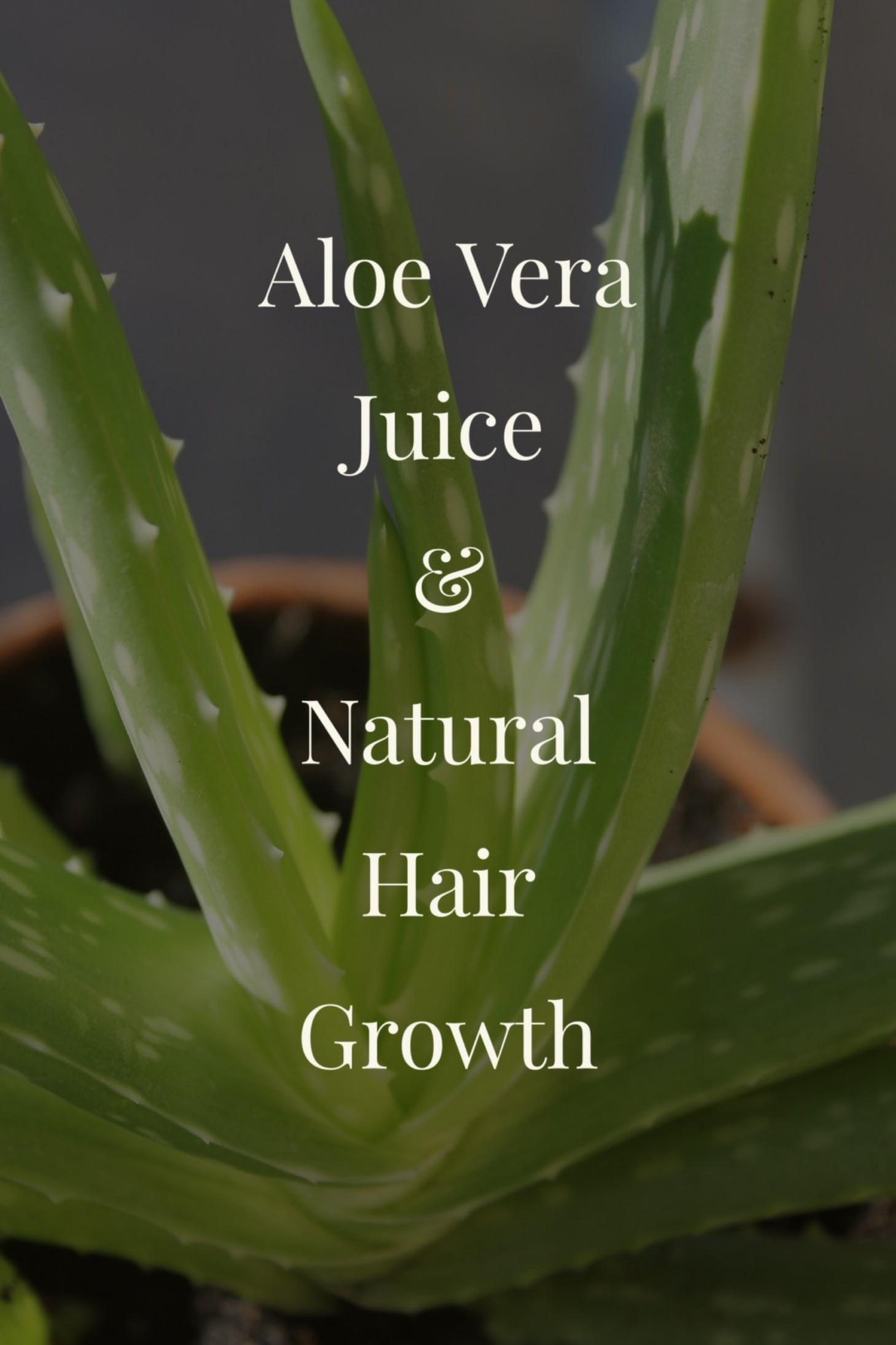 Aloe Vera Juice And Natural Hair Growth Curly Chic